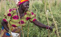 식량과 기후변화