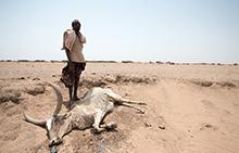 슈퍼 엘리뇨 위기 : 에티오피아 긴급구호
